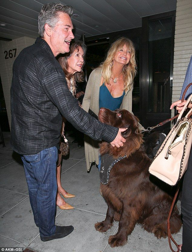Goldie Hawn And Kurt Russell Make A Very Big New Puppy Pal In Beverly Hills Newfoundland Dog Brown Newfoundland Dog New Puppy