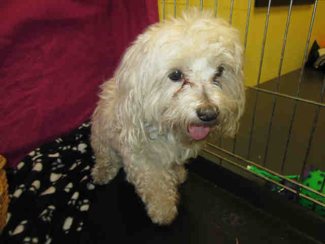 Pictures Of Dogs At Animal Control In Jsmestown Ca