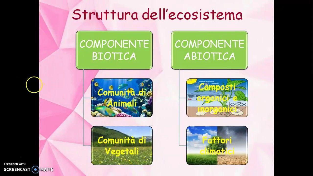 Quiz Ecologia Per Bambini ecologia ambiente ecosistema per la scuola primaria