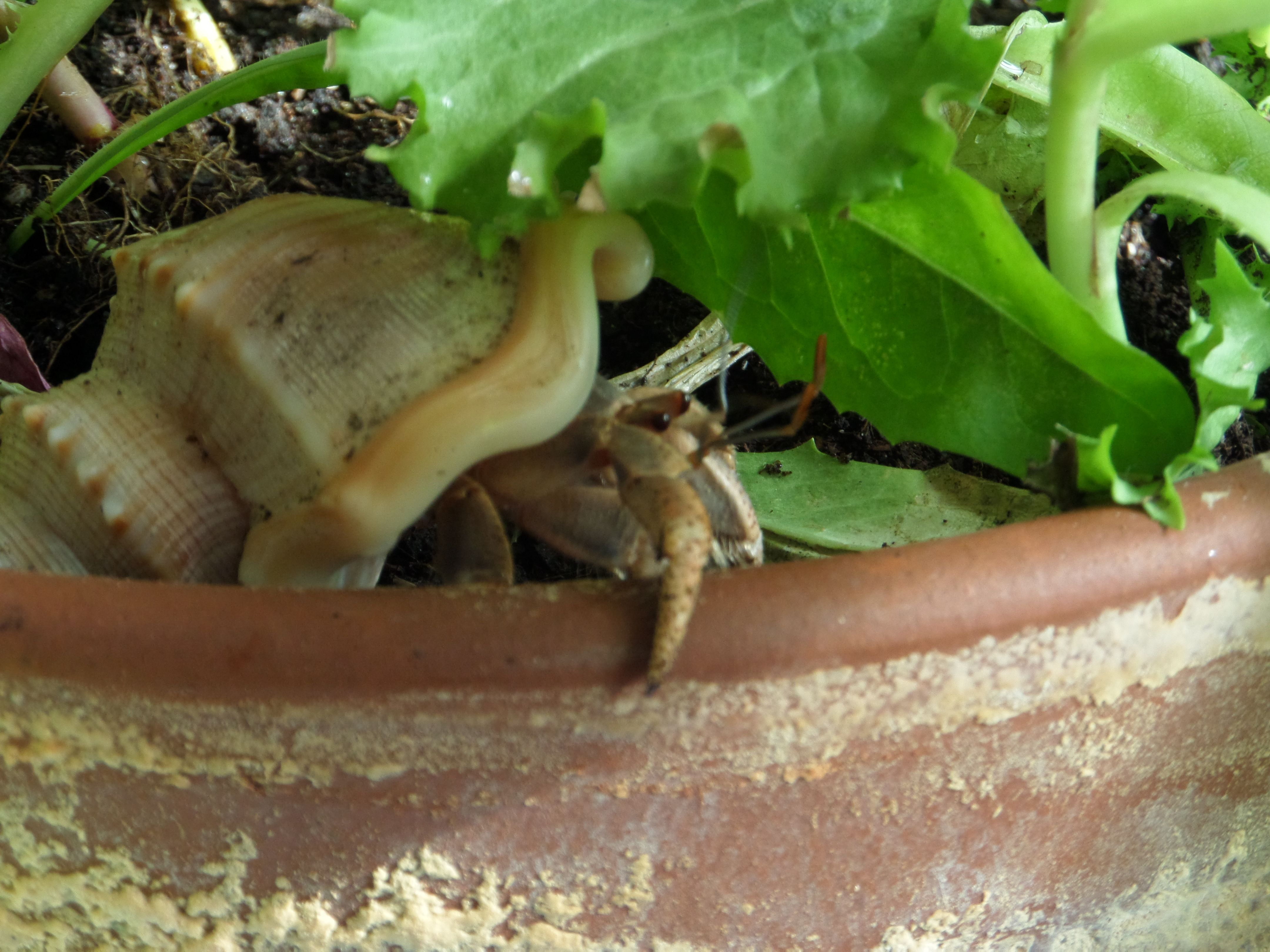 Nibbles On Leaf Lettuce In My Inside Plant Pot To See