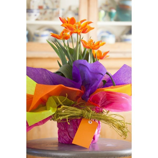 Colorful waxed tissue paper for flowers collection best evening waxed waterproof tissue paper tissue paper cut flowers and gardens mightylinksfo