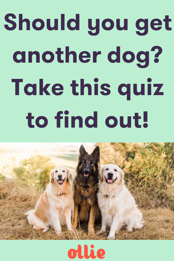 Should You Get Another Dog Take This Quiz To Find Out Whether You Should Add Another Pup To Your Family Healthydogs Doglover Pet Dog Advice Dogs What Dogs