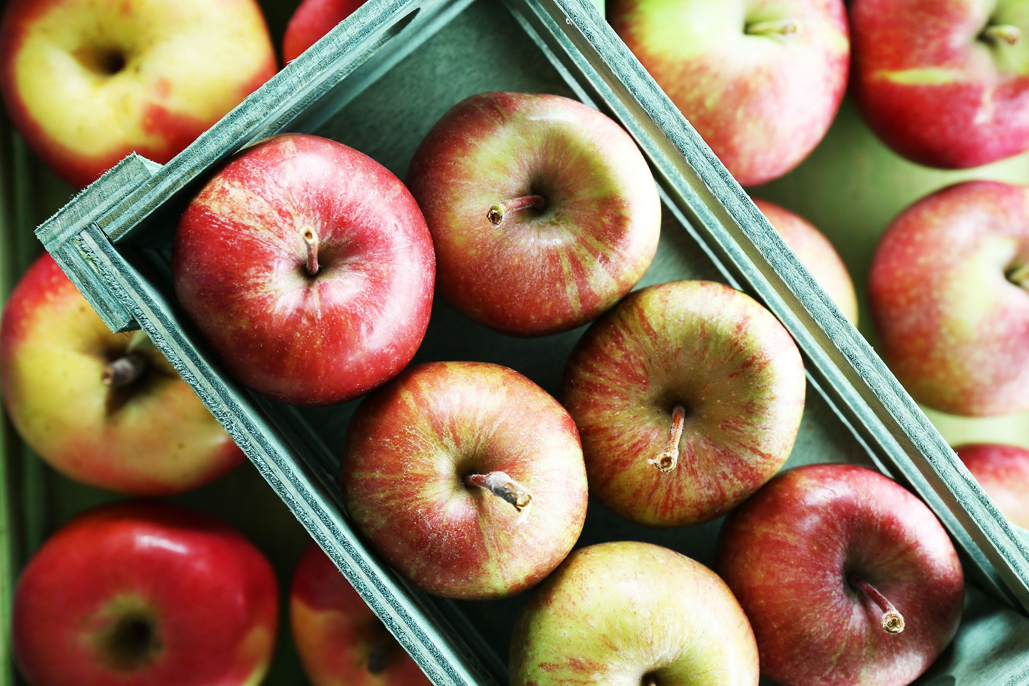 The best apple picking NY kids and families will love