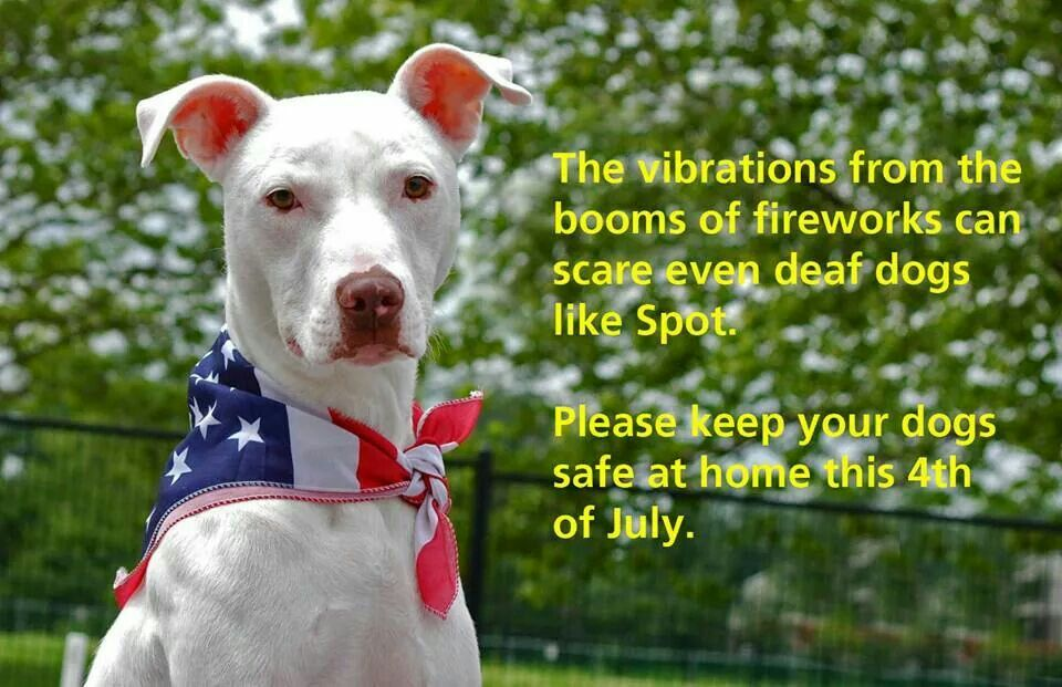 Pin By Kaye Smith On Red White And Blue Holidays Dog Daycare Dogs Deaf Dog
