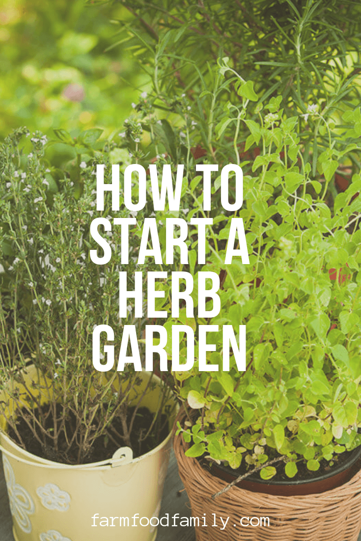 Herb Garden: Herb Gardening for Beginners A Basic Herb Garden: Herb Gardening for Beginners - Farm.Food.FamilyA Basic Herb Garden: Herb Gardening for Beginners - Farm.Food.FamilyBasic Herb Garden: Herb Gardening for Beginners A Basic Herb Garden: Herb Gardening for Beginners - Farm.Food.FamilyA Basic Herb Garden: Herb Gardening for Beginners - Farm.Food.Family