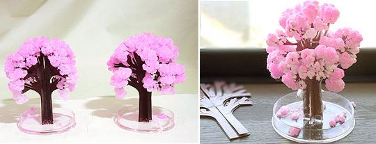 Magic Sakura Home Cherry Blossom Set Of 3 Cherry Blossom Cherry Blossom Tree Pink Blossom