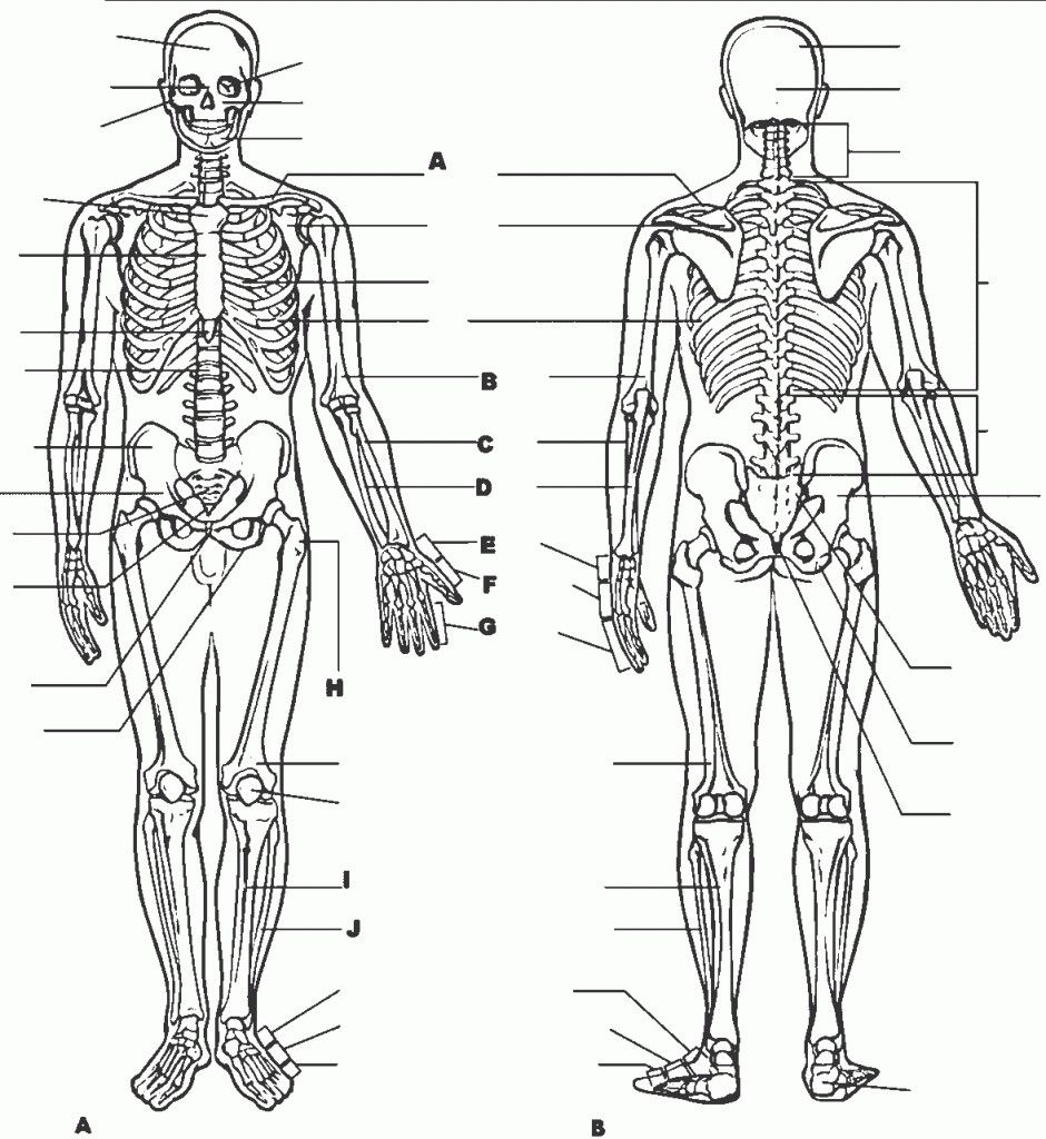 anatomy and physiology coloring pages