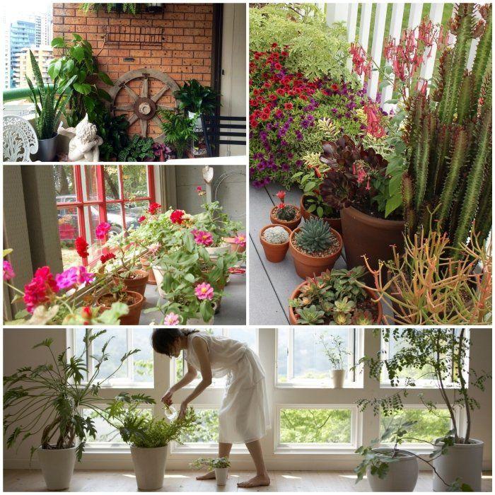 pflanzen überwintern balkonpflanzen pflege topfpflanzen Bunter - tipps pflege pflanzen wintergarten