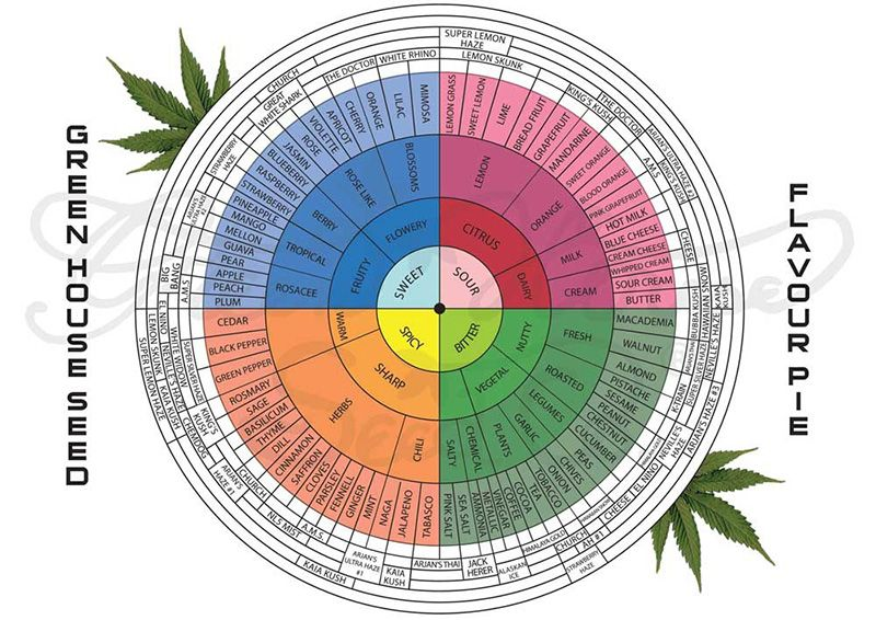 Terpenes chart what are cannabis and do they howard stern also best images on pinterest medicine rh