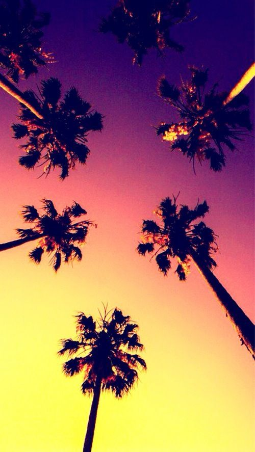 IPhone Wallpaper Palms