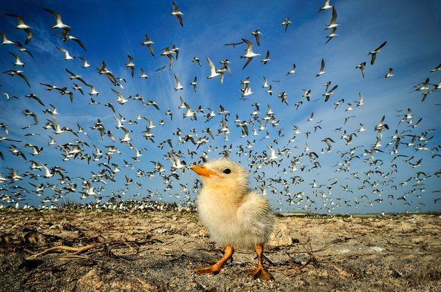 2012 國家地理雜誌攝影大賽,參賽作品欣賞、美圖免費下載 | T客邦 - 我只推薦好東西