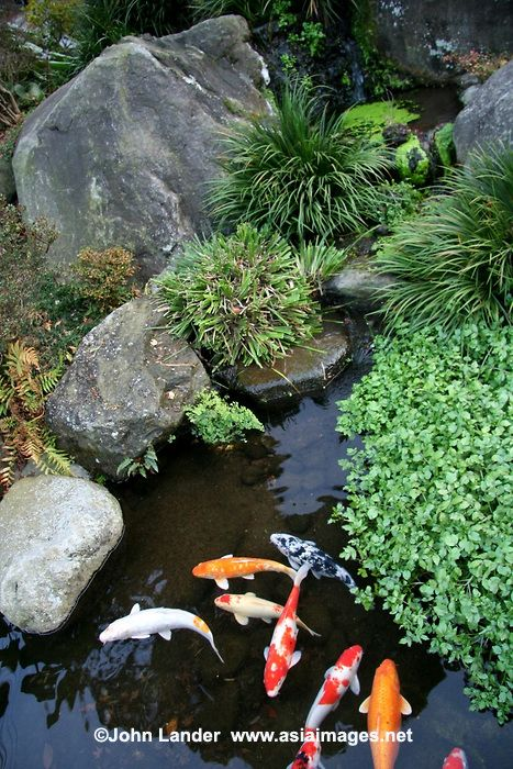 Japanese koi ponds or carp ponds are a standard feature in for Koi pond japanese garden
