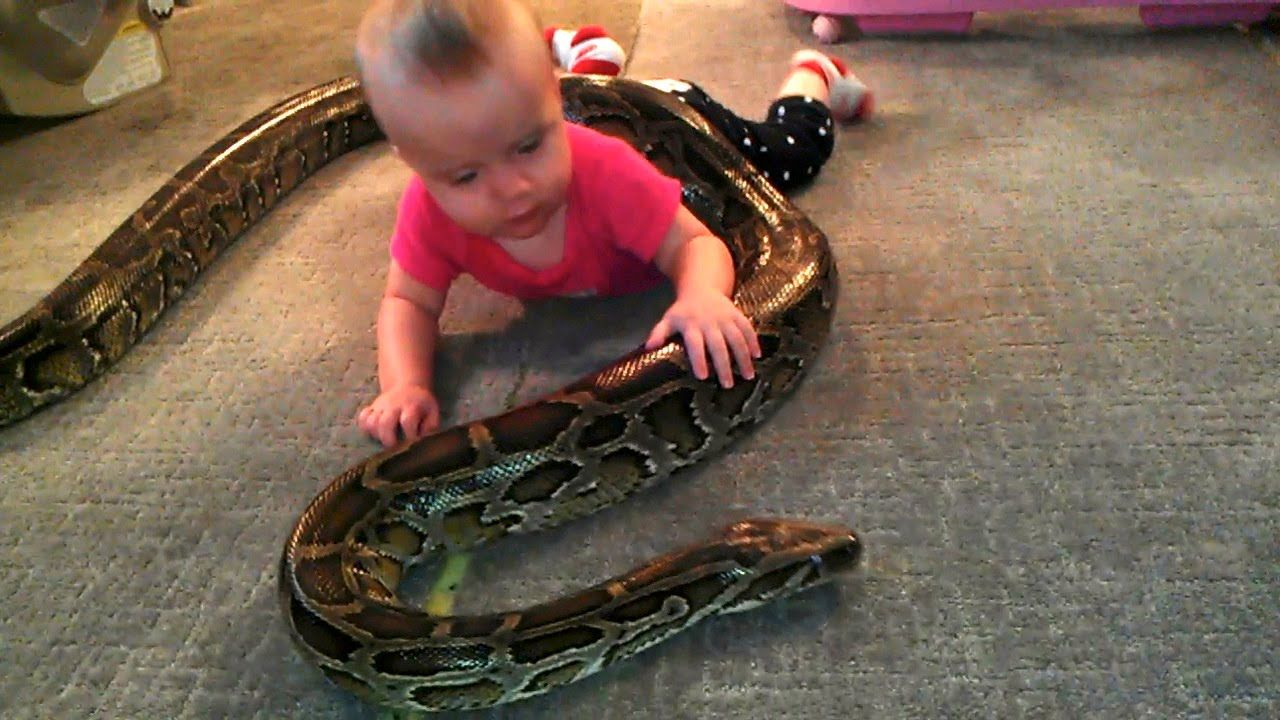 Baby Plays With Python Funny Videos For Kids Funny Babies Funny Animal Videos