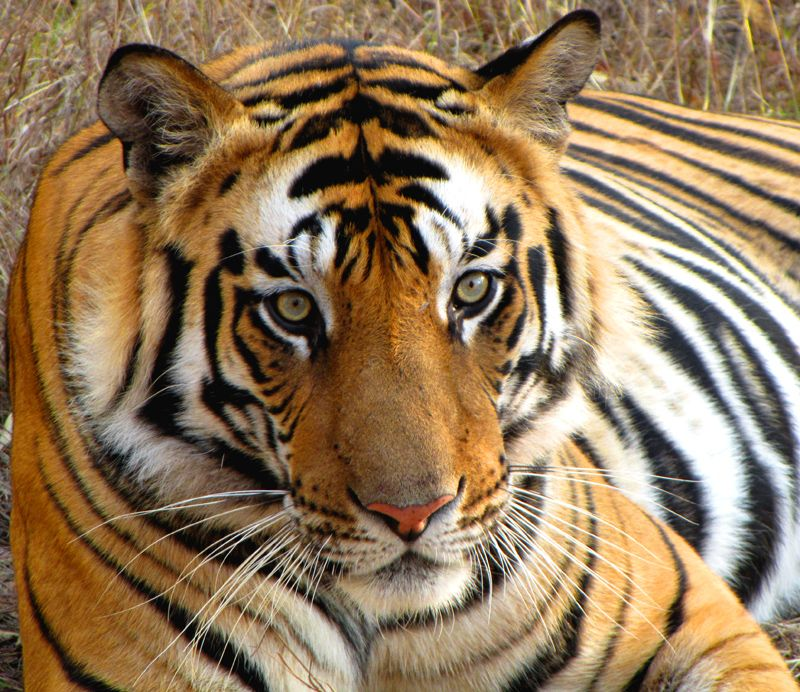Itineraries & Trips Tiger, Pretty cats, Sumatran tiger