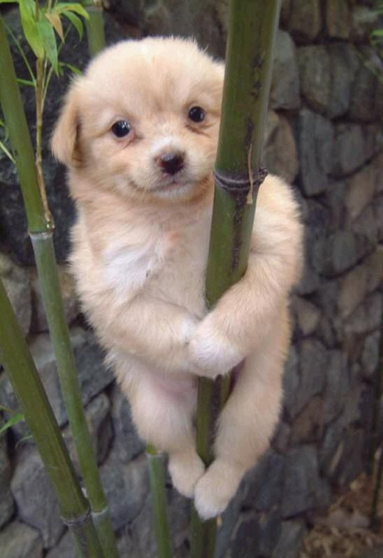 Koala Dog Or Bamboo Dog Funny Dog Pictures Funny Animal Quotes