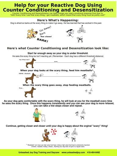 If You Want To Train Your English Bulldog Here Is A Must Have Dog