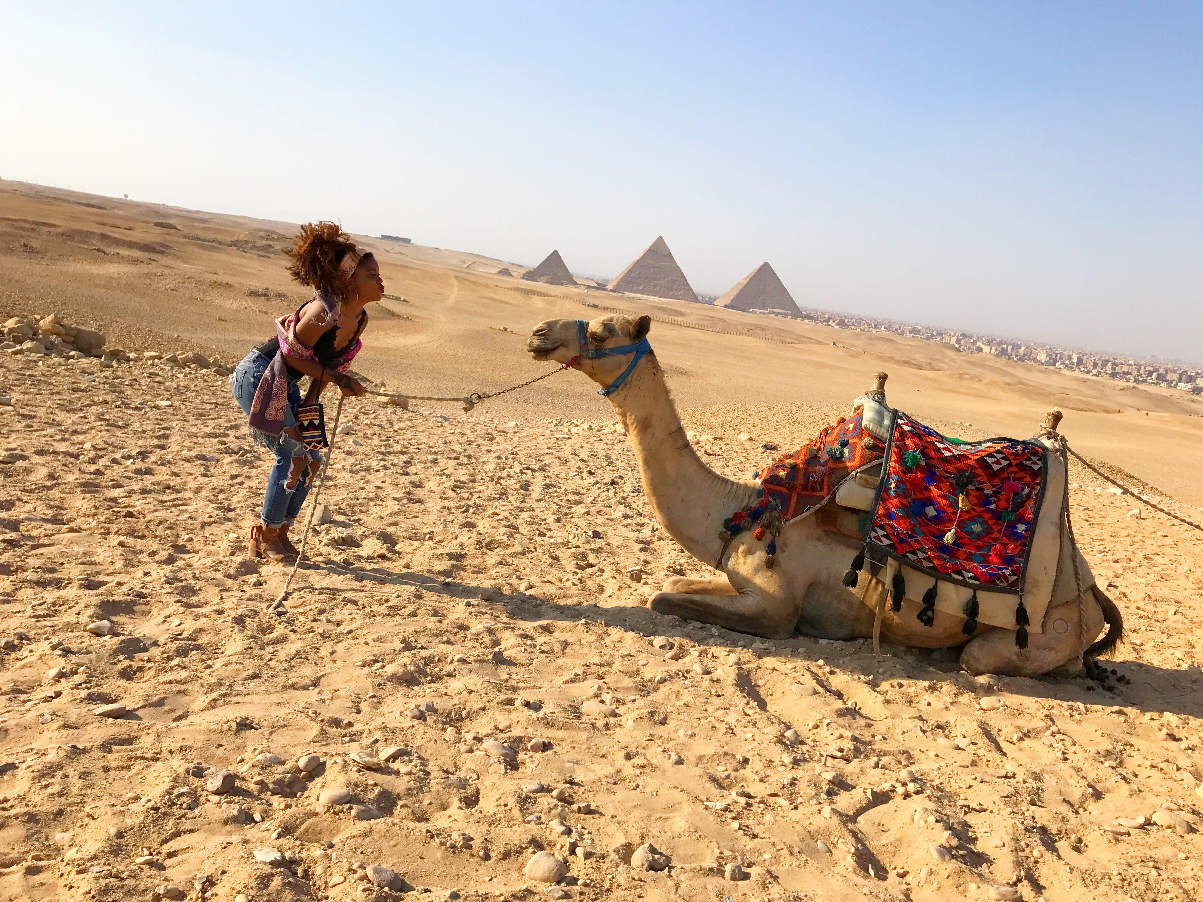 Pin by cynthia eustache on Travel Giza, Animals