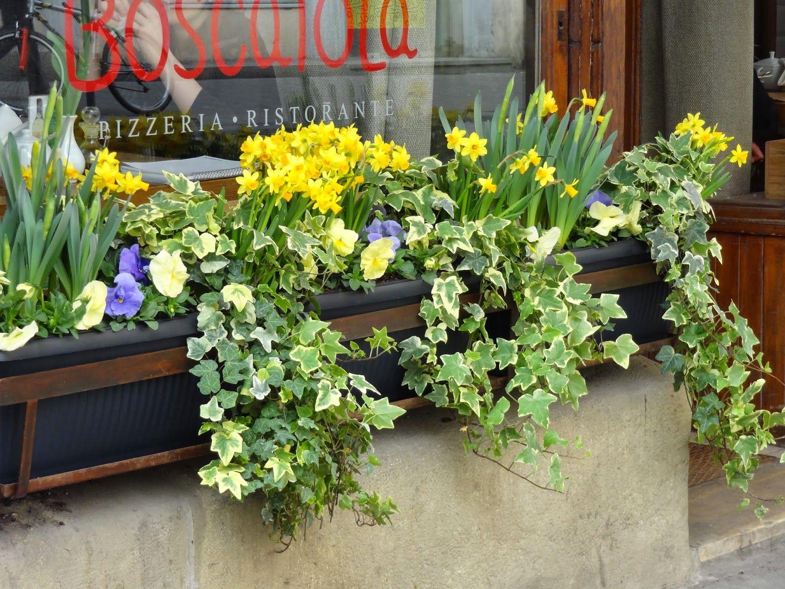 Pin By Sylwia Zk On Kompozycje Wiosenne W Donicach Plants