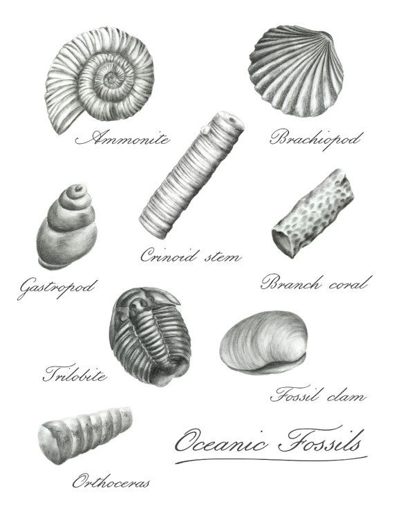 Fossil Drawing In 2019 Art Pinterest Drawings Artwork And Fossil