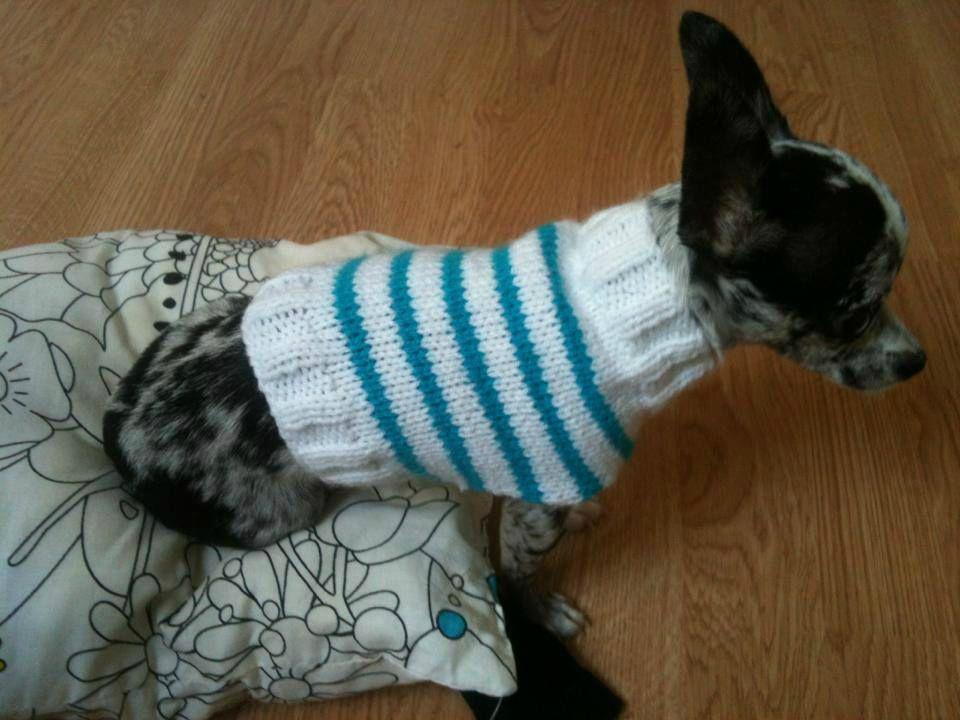 Patron tricot manteau chihuahua couture pinterest tricot pour chien patron tricot pour - Petit chien gratuit ...