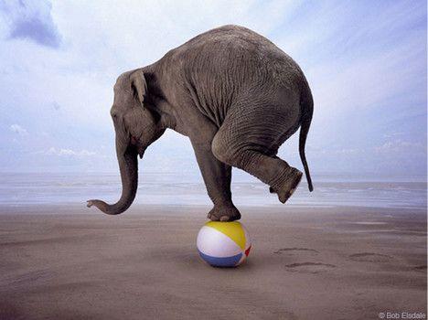 Image result for elephant balancing on ball