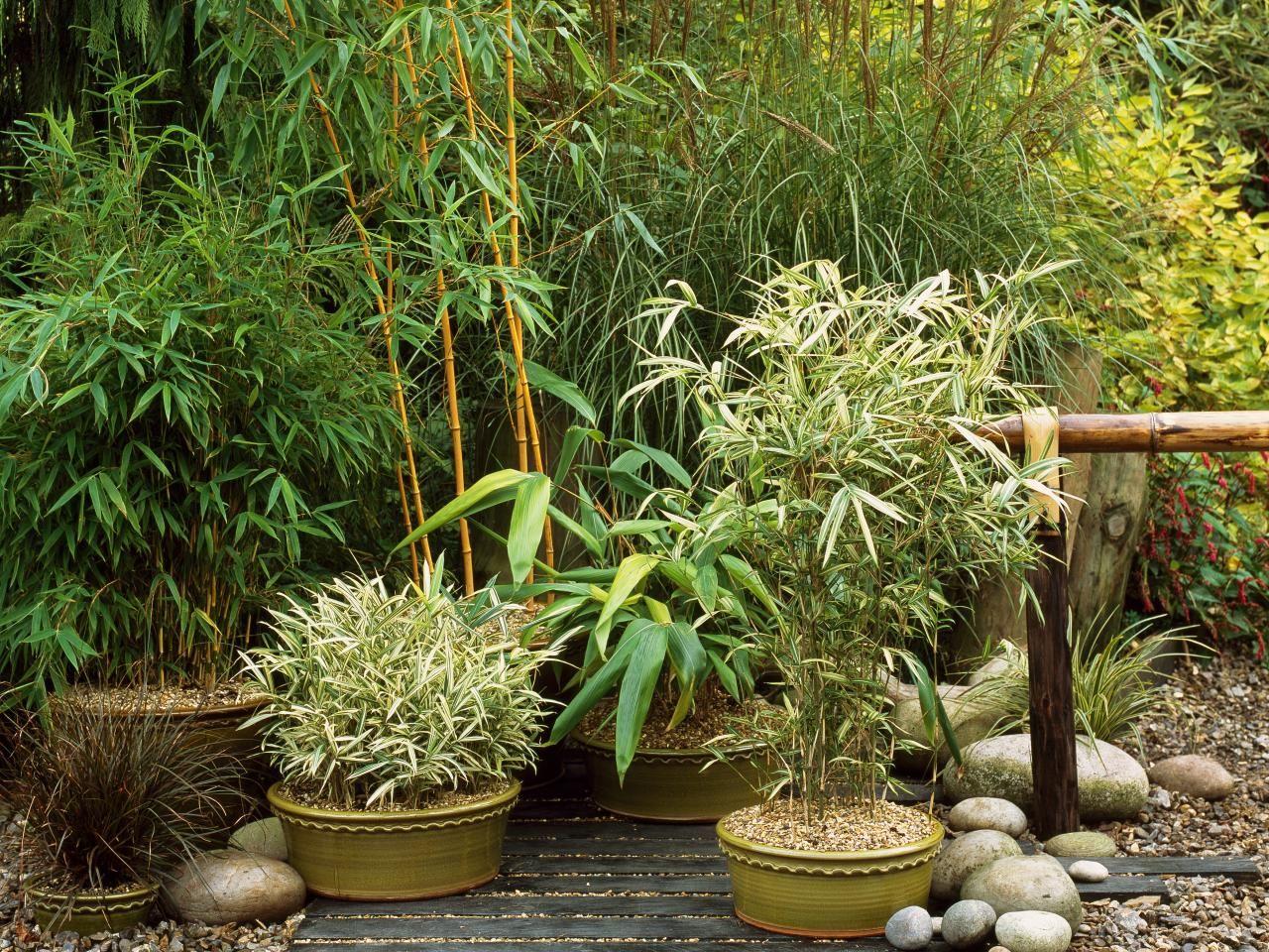 Asian Inspired Container Garden Creative Gardening Asian Garden Perennial Garden