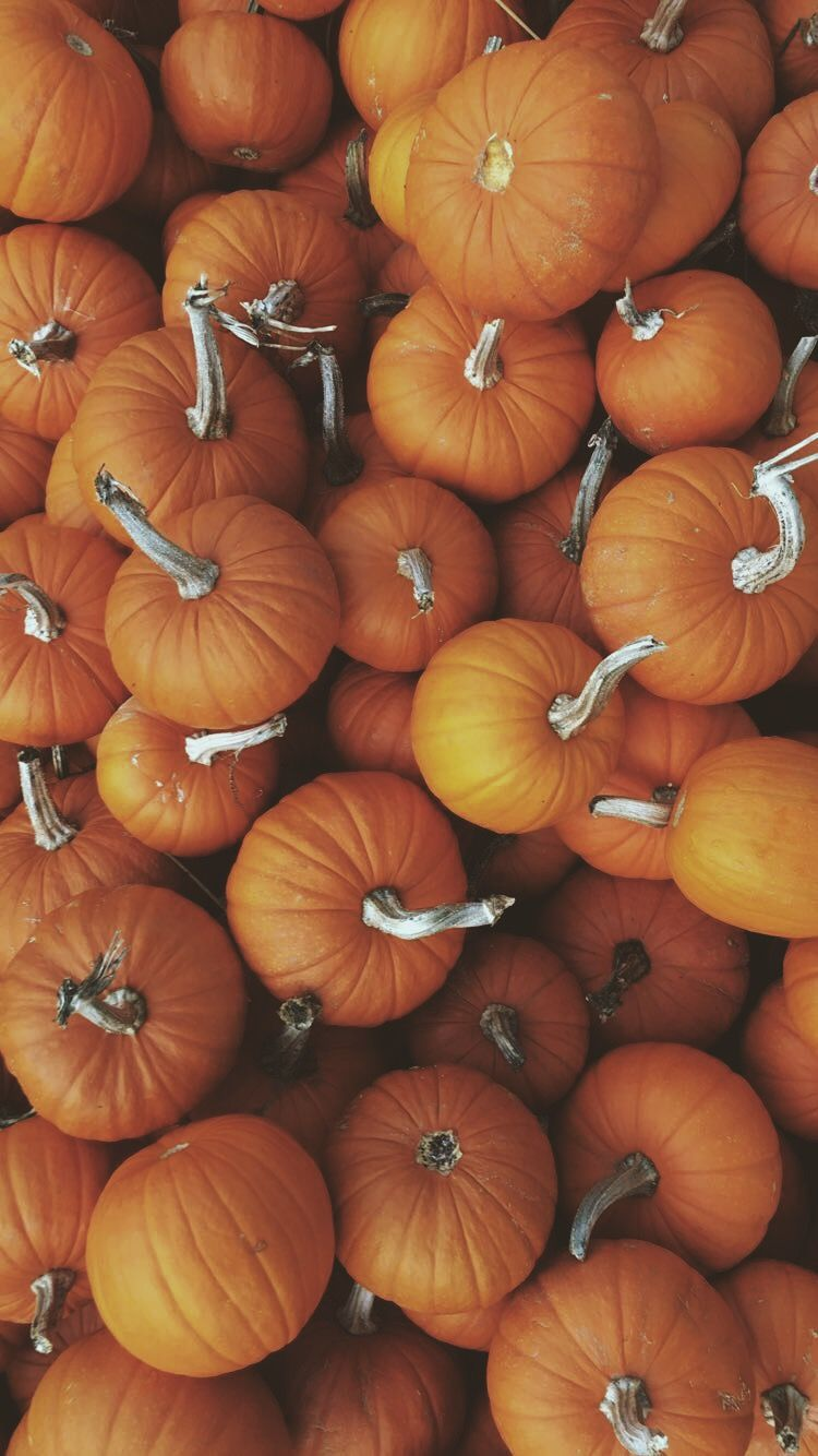 Pin By Laura Watson On That Fall Feeling Iphone Wallpaper Fall