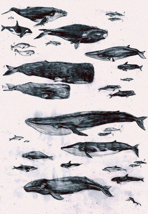 Wale, die schön sind.