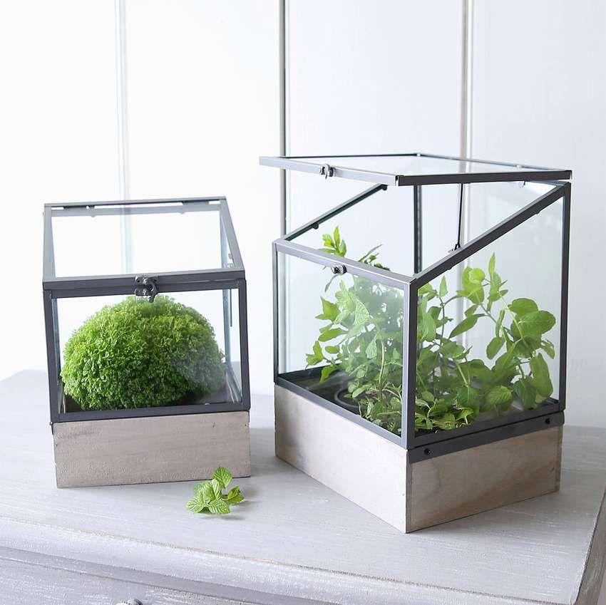 застекленная тепличка для комнатных растений фото сейчас как никогда
