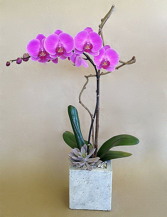 Plant Care|Orchid Wrangler|Los Angeles Florist|Orchid Gift Delivery