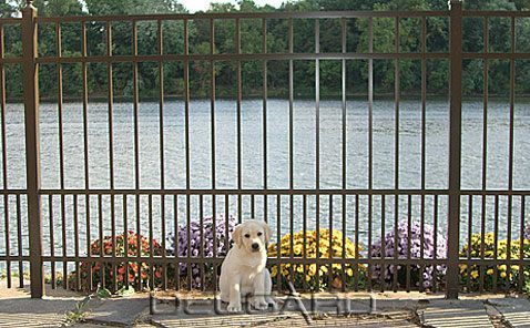 Long Island Aluminum Fence Company Fence Option For Small Dogs