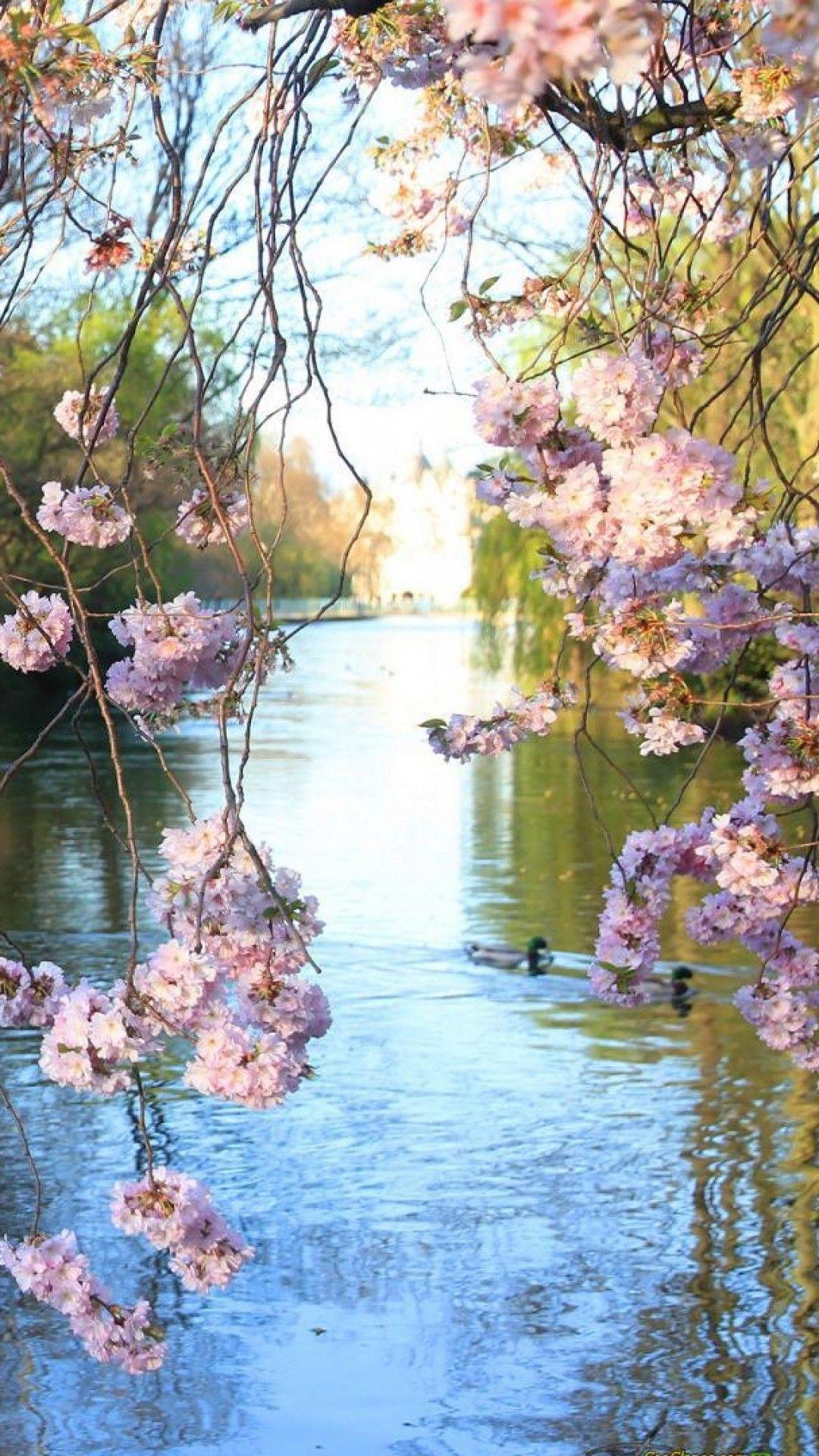 Bayou Springtime Beautiful Landscapes Beautiful Nature Nature Photography