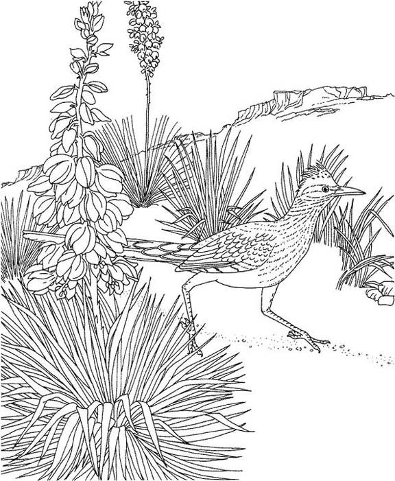 New Mexico Roadrunner Coloring Page Purple Kitty Yla Fauna