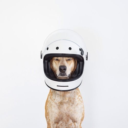 Picked up Maddie's new race helmet for the FJ60 :)  It's been...//maddie the coonhound