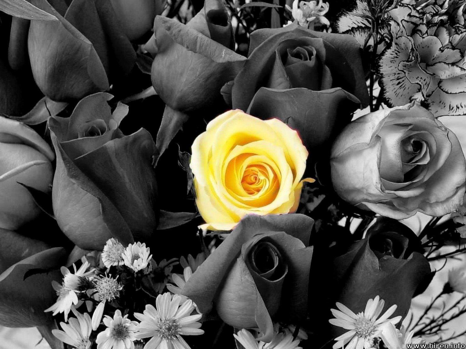 Black And White Photography With Yellow Color Splash Check it out! | Writer...