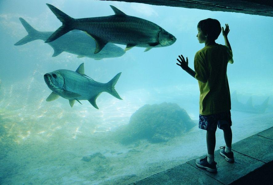 enfant aquarium beauté contemplation nature émerveillement éducation