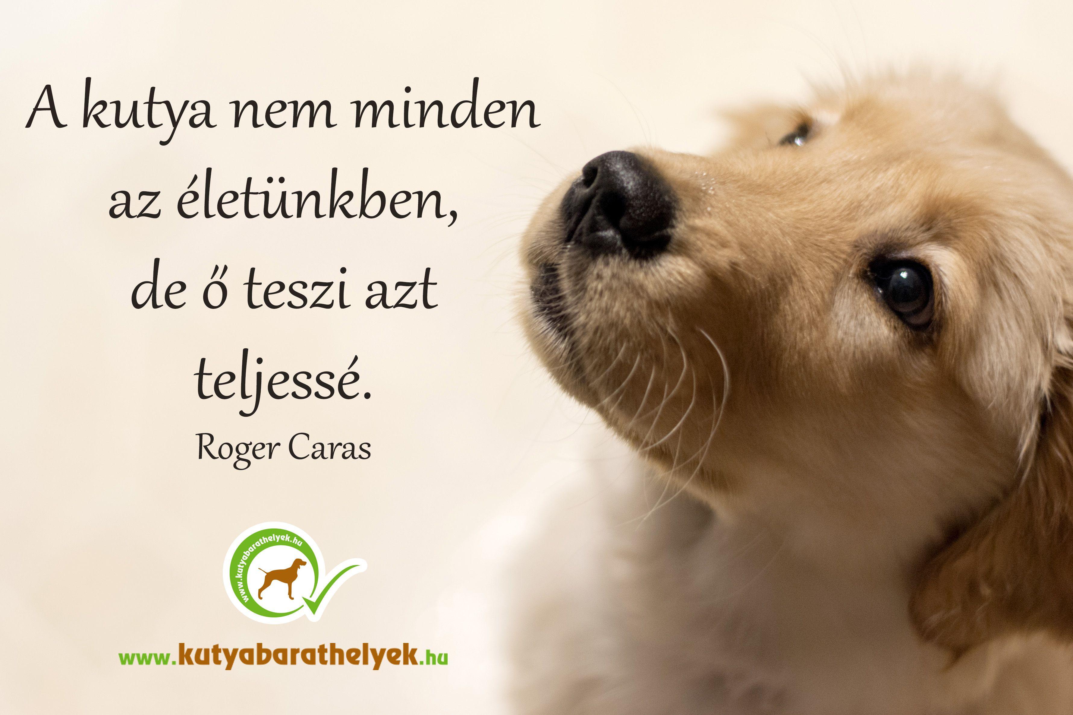 kutyás idézetek A kutya nem minden az életünkben. De ő teszi azt teljessé. (Roger  kutyás idézetek