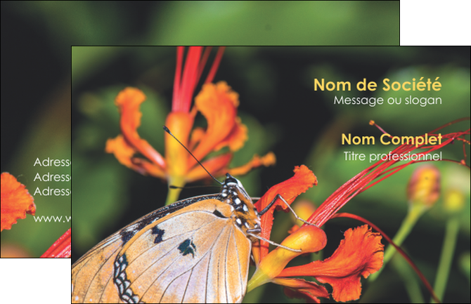 carte de visite mod u00e8le et exemple belle photo de papillon  macro  couleur  insecte  nature
