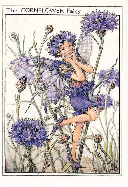 Cornflower Fairy Postcard Flower Fairies Vintage Fairies Fairy Art