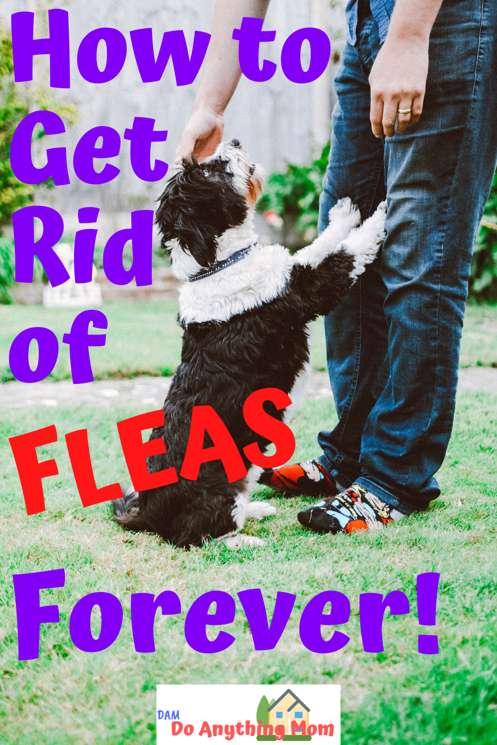 How to Get Rid of Fleas Forever! -   18 how to get rid of fleas in house ideas