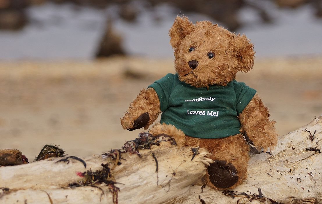 Found In Montauk New York Sean Found This Teddy Bear Wearing A Green T Shirt With Somebody Loves Me Written On It Today 31 Dec In Montauk New York And