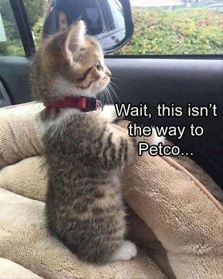 That Awkward Moment Animals Have Realized Something (Memes)