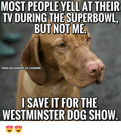 38 Funniest Memes About Dog Shows Funny Dog Memes Dog Show Funny Dogs