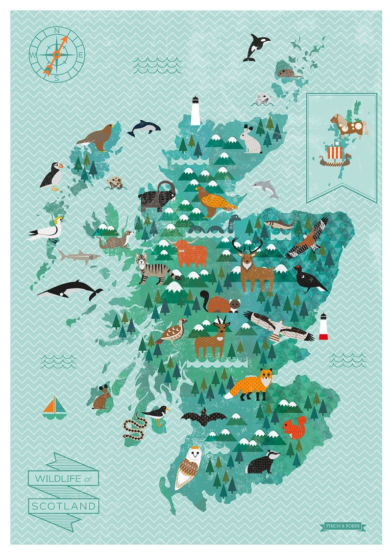 Wildlife Map Of Scotland Print in 2019 | Illustrate it! | Map, Map on