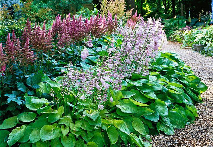 Hostas in bloom with astilbe, via Lowe's Creative Ideas. Now, I've on hosta and daylily garden, hosta and caladium garden, hosta garden plans blueprints, hosta and hydrangea garden,