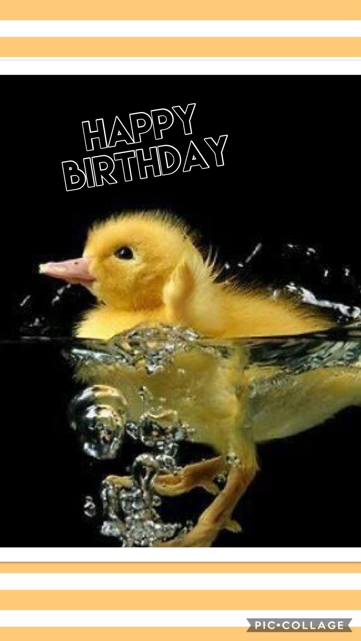 Happy Birthday Duck Meme : happy, birthday, Funny, Puzzle, Games, Birthday, Greetings, Animals,, Animals