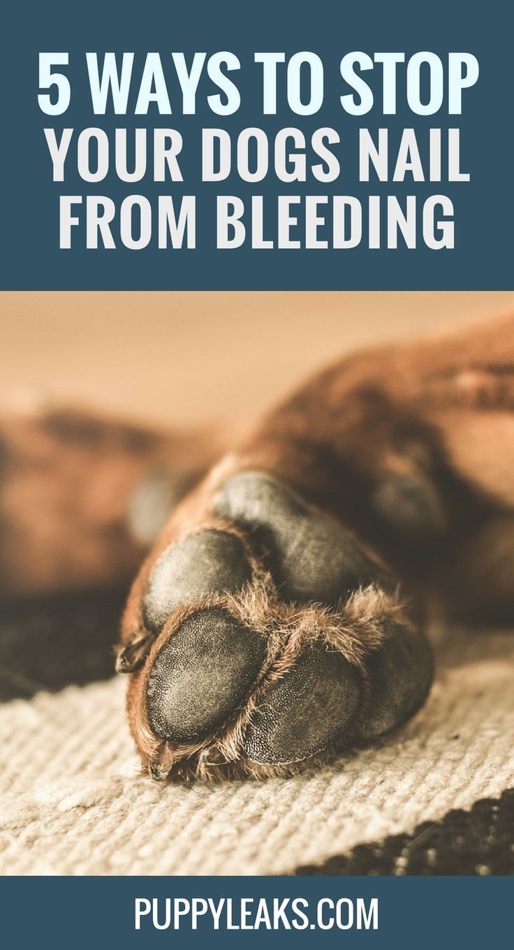5 Ways to Stop Your Dogs Nail From Bleeding | Pets (Health & Care ...