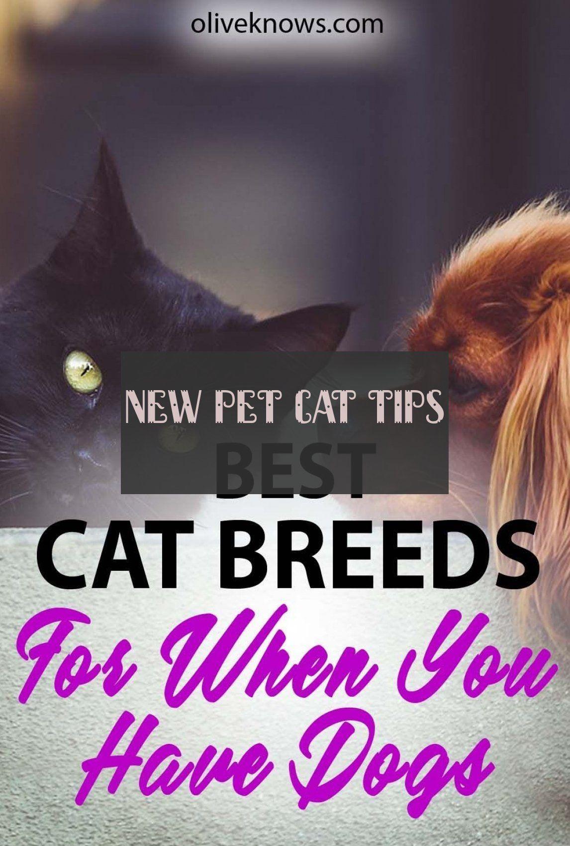 New Pet Cat Tips Neue Haustierkatzentipps