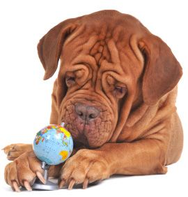Aeropets Offers International Pet Transport Services We Provides A