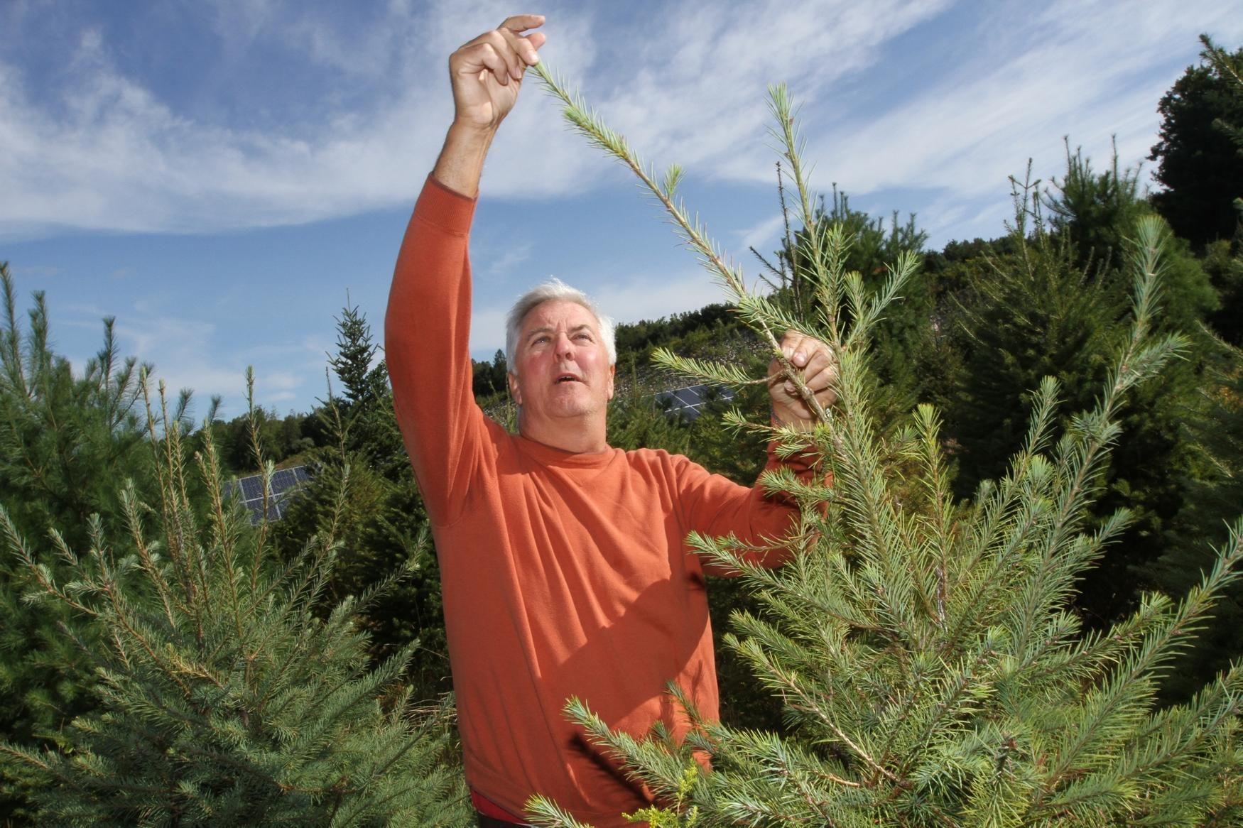 R I Farmers Race To Sculpt Christmas Trees Tree Farms Christmas Tree Farm Tree